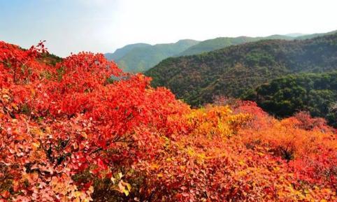 2021香山红叶在哪里看最美(今年北京香山红叶红了吗)
