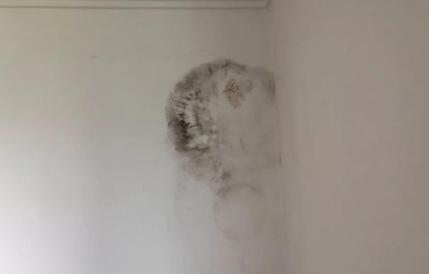 发霉的墙面可以贴墙纸吗(卧室墙面发霉对身体健康有影响吗)